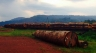 Traffic du bois au Gabon : grosse prise