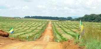 Le programme Graine lancé par le président de la République dans une 4e province du Gabon