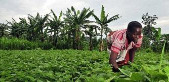 Un salaire de 100 000 francs par mois promis par Ali Bongo aux agriculteurs