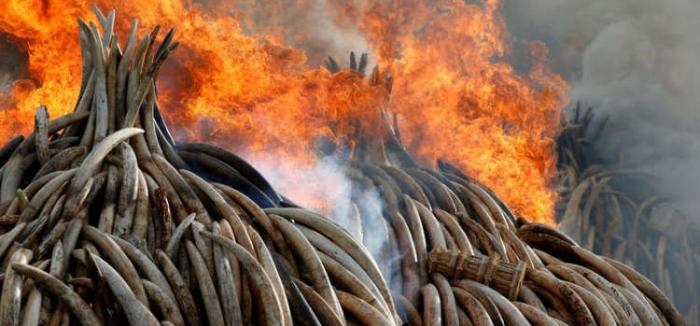 Ali Bongo rejoint le Kenya dans la lutte contre le trafic d'ivoire