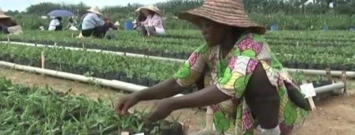 Agriculture : 64,6 milliards de francs CFA pour le programme GRAINE