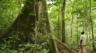 Le Gabon veut engager 3 milliards de dollars pour le climat