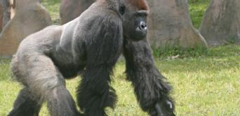 Environnement : les efforts du Gabon récompensés par la Norvège à l'ONU