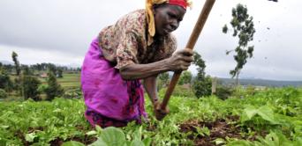 La Banque africaine de développement assure fournir tout son soutien au développement des infrastructures agricoles