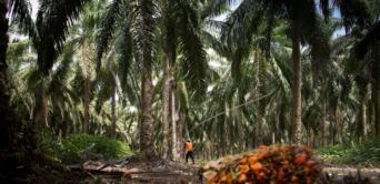 Olam International améliore les opérations d'huile de palme au Gabon